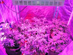 Led Grow Lights Cannabis Best Led Grow Light For Cannabis Ledgrowlightsexpert
