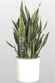 Plants For The Bedroom by 5 Plants For Your Bedroom To Help You Sleep Better Blindfold