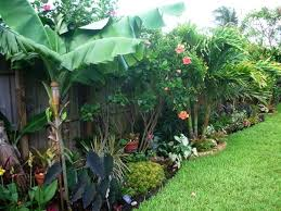 Backyard Oasis Storage And Entertaining Station Best 25 Tropical Backyard Ideas On Pinterest Tropical Garden