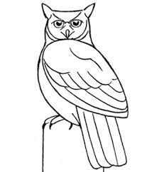 draw owls drawing tutorials u0026 drawing u0026 draw owls