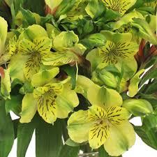 lilies flowers yellow peruvian lilies flowers