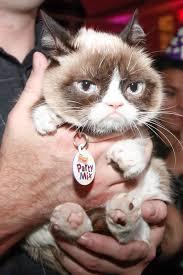 Grumpy Cat Meme Creator - grumpy cat meme generator cat best of the funny meme