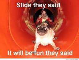 Dog Funny Meme - 25 funny dog memes weknowmemes