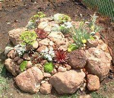 tips for planting a rock garden hgtv environment and plants