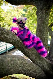 spirit halloween cheshire cat 19 best comic con images on pinterest cosplay costumes