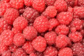 raspberries how to plant grow and harvest raspberries the old