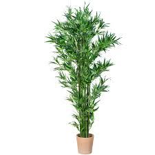 sorte de bambou plant de bambou tronc véritable arbre artificiel artificielles