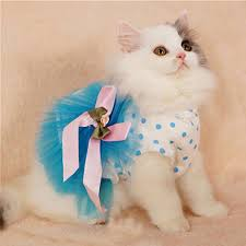 Halloween Costumes Cats Wear Cheap Cat Costumes U0026 Cat Shark Rabbit Tuxedo Peacock