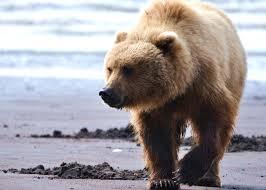 top 10 animal encounters u2013 intelligent travel