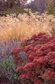365 best planting design images on plants ornamental