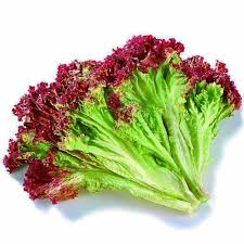 Bag Gardening Vegetables by Compare Prices On Lettuce Bags Online Shopping Buy Low Price