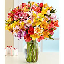 blooms flowers 100 blooms of peruvian lilies with free glass vase