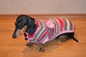 pet sweaters sweater pet sweater pet clothing dachshund sweater