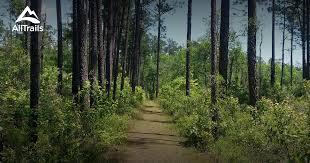 Mississippi forest images Best trails in de soto national forest mississippi 207 photos jpg