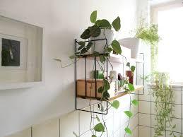 Home Decor 2018 by Bathroom House Plants Bathroom Trends 2017 2018