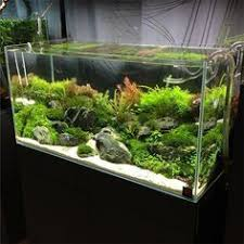 Ada Aquascaping 294 Likes 15 Comments South Bay Aquascaping Southbayaqua On