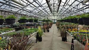 native plant centre green thumb garden centre nanaimo vancouver island u0027s largest