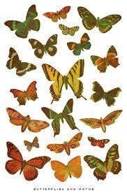522 best butterflies images on pinterest butterflies beautiful