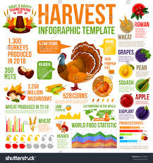 autumn harvest celebration infographic thanksgiving day stock