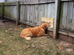 Backyard Fencing Ideas Clever Backyard Fence Ideas Also Dogs Backyard Dog Friendly