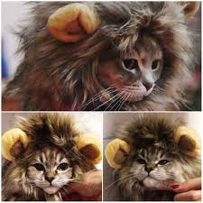 Pet Cat Halloween Costume Pet Hat Costume Lion Mane Wig Cat Pets Halloween Dress