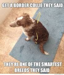 Dog Doctor Meme - 10 best border collie memes of all time