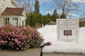 frelinghuysen arboretum newsletter