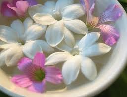 Jasmine Flowers 10 Benefits Of Jasmine Flower Youne