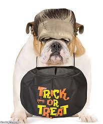 English Bulldog Halloween Costumes Halloween Animal Costumes Pictures Freaking