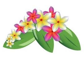 plumeria flower plumeria flower free vector 7272 free downloads