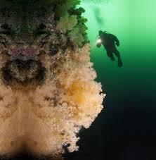 amazon com diving flashlight volador 1000 lumen waterproof