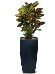 home plants best online flower shops in dubai uae for sale indoor plants
