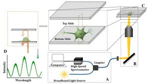 osa label free optical detection of action potential in