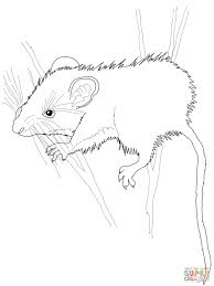 mice coloring pages free coloring pages