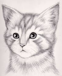 354 best cat images on pinterest cat art cat illustrations and