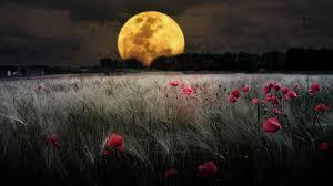 field dans ta chambre moon poppy field field wallpaper