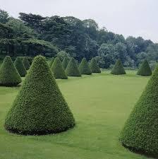 Topiaries Plants - 12 best shapes of plants images on pinterest topiaries plants