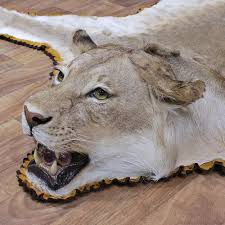 Fake Lion Skin Rug With Head Lion Rug Roselawnlutheran