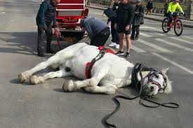 How To Tell If A Horse Is Blind Central Park Carriage Horse Collapses On The Job New York Post