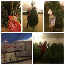 live christmas tree buying blog review jlapis