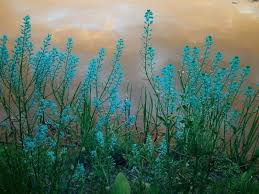 turquoise flowers flowers beautiful stems turquoise blossoms wildflowers flowers
