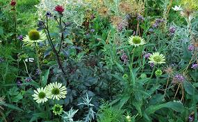 Summer Garden Plants - three drought tolerant plants for your summer garden athome magazine