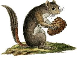 cute vintage critter image squirrel the graphics fairy