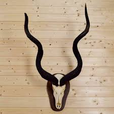 horns for sale safariworks taxidermy sales animal horns and antlers mounts for sale