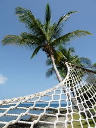free photo hammock palm tree perspective free image on