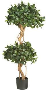 nearly 5233 sweet bay topiary