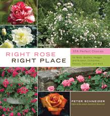 right rose right place peter schneider 9781603424387 amazon