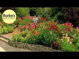 Burke Backyard 268 Best Plants Images On Pinterest Tropical Plants Garden