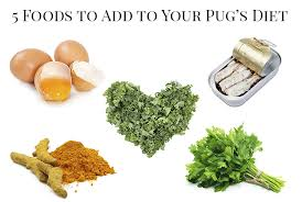 5 foods to add to your pug u0027s diet the pug diary