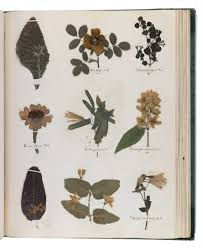 Types Of Botanical Gardens by Herbarium Archives Plant Talk